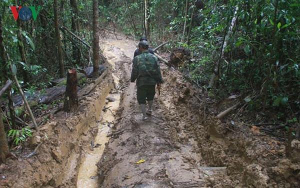 Nhìn lại hiện trạng rừng sau 3 năm đóng cửa rừng tự nhiên (12/3/2019)