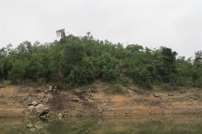 Thái Nguyên: Ngang nhiên chặt phá rừng phòng hộ Hồ Núi Cốc (1/4/2019)