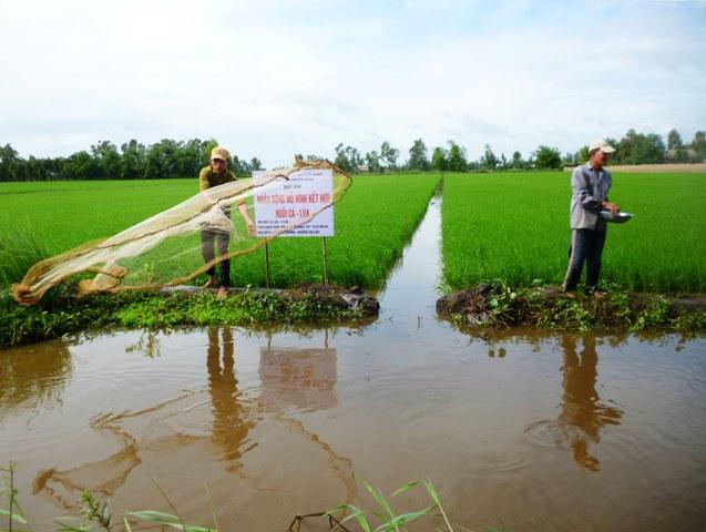 Ứng dụng hiệu quả các công nghệ sản xuất tiên tiến trong nông nghiệp tại tỉnh Hậu Giang (24/4/2019)