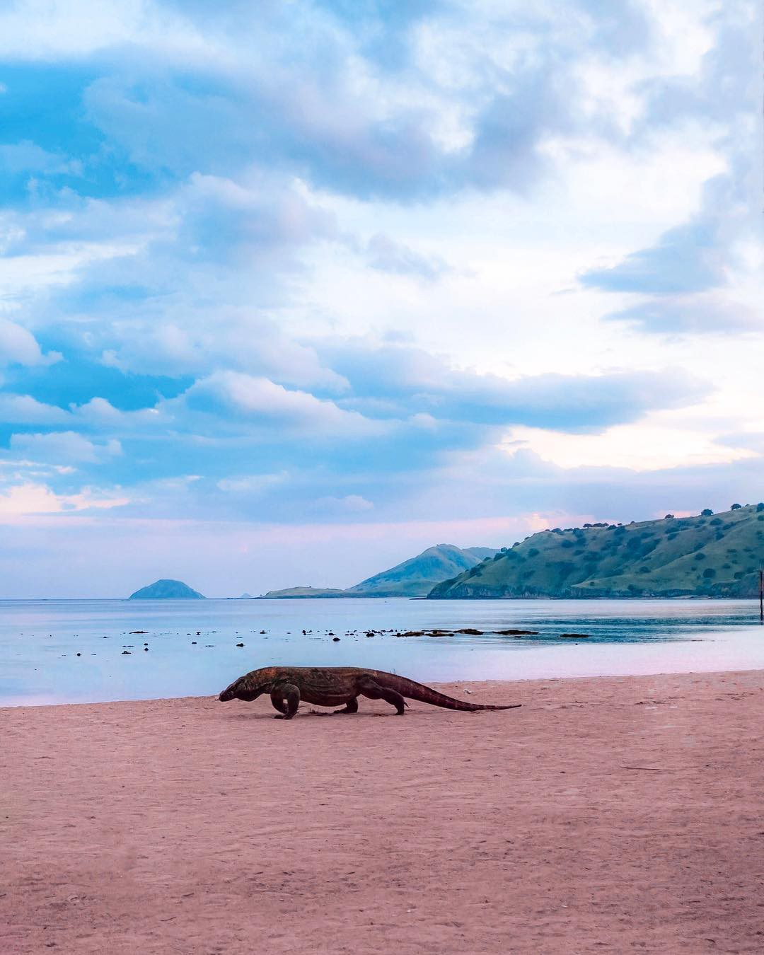 Indonesia sẽ đóng cửa đảo rồng Komodo để ngăn chặn buôn lậu (11/4/2019)