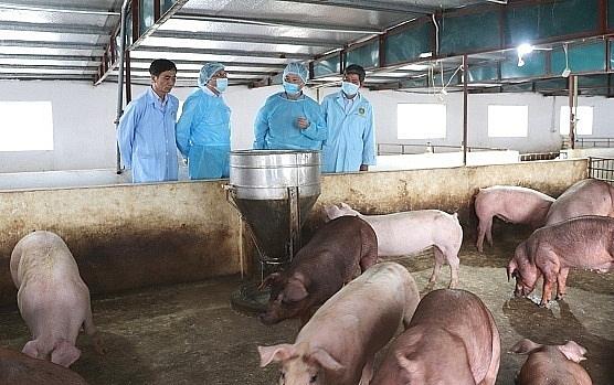 Kinh nghiệm phòng chống dịch tả lợn châu Phi (21/4/2019)