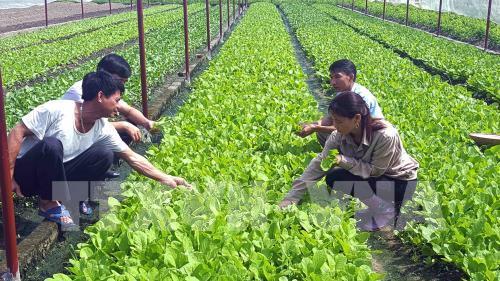 Giải pháp nào cho việc ứng dụng những tiến bộ khoa học kỹ thuật vào sản xuất nông nghiệp? (15/4/2019)