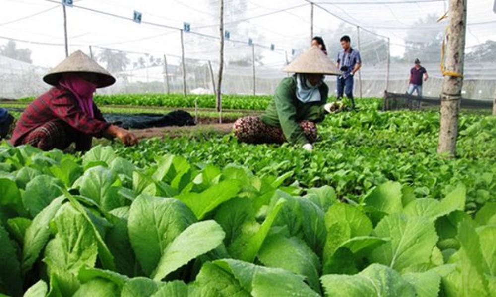 Giải pháp nào để thúc đẩy phát triển nông nghiệp hữu cơ ở Việt Nam (4/4/2019)