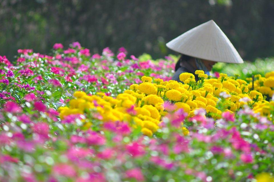 Giải pháp phát triển sản xuất hoa bền vững ở Đồng bằng sông Hồng (16/4/2019)