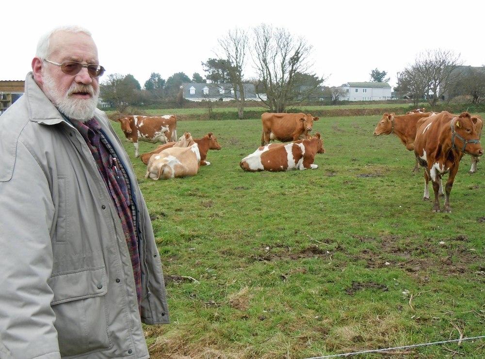Ứng tuyển vào công việc Người chăn nuôi bò sữa tại hòn đảo Sark ở phía Tây Nam nước Anh (16/4/2019)