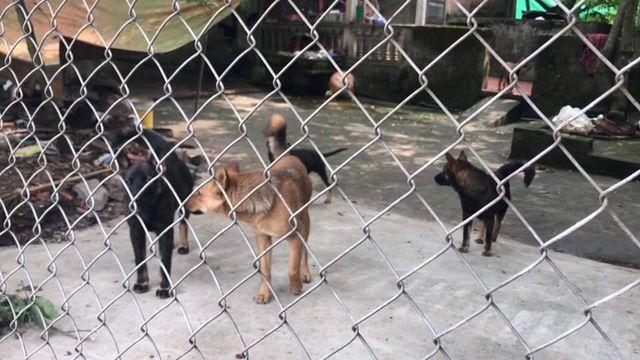 Chủ đàn chó gây hậu quả nghiêm trọng có bị xử lý hình sự hay không? (5/4/2019)