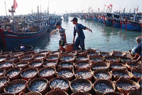 Làm sao để phát triển nghề cá trách nhiệm và bền vững? (5/4/2019)