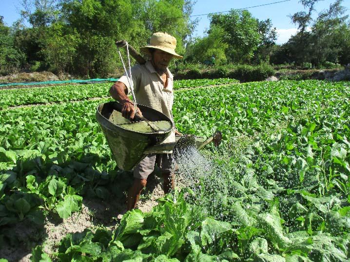 Một gia đình người dân ở Đà Nẵng có đời sống khá lên nhờ trồng rau sạch (11/4/2019)