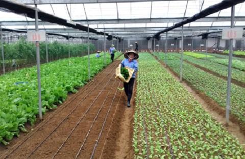 Học làm nông, nhà nông làm giàu (20/4/2019)