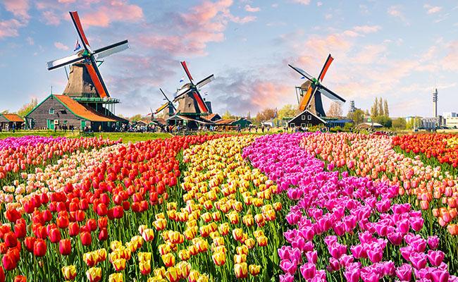 Thiên đường hoa tulip Keukenhof tuyệt đẹp của Hà Lan (6/4/2019)