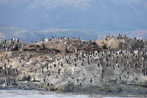 Khám phá thành phố tận cùng thế giới: Ushuaia ở Argentina (25/5/2019)