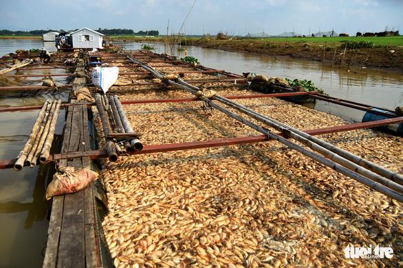 THỜI SỰ 6H SÁNG 28/5/2019: Nguyên nhân hàng nghìn tấn cá chết trên sông La Ngà (Đồng Nai): Đã có kết quả xét nghiệm các mẫu.