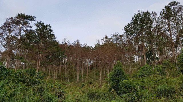 Trao đổi với phóng viên Đài Tiếng nói Việt Nam về vụ việc đầu độc rừng thông tại tỉnh Lâm Đồng (14/5/2019)