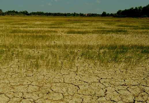 Cần có một chương trình quốc gia về nghiên cứu lúa thích ứng với biến đổi khí hậu (15/5/2019)
