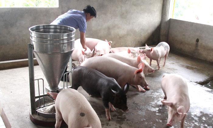 Bài học từ chăn nuôi nhỏ lẻ (29/5/2019)