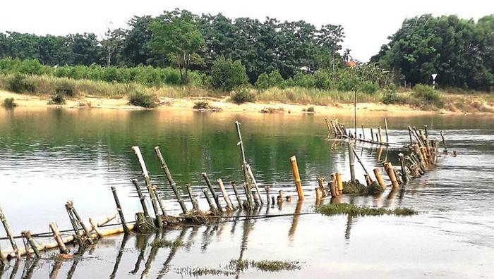 Thừa Thiên Huế: dân đóng cọc tre xuống sông ngăn cát tặc (10/5/2019)