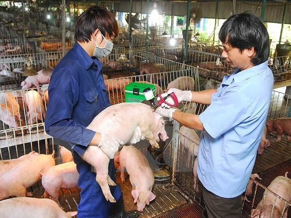 Thực trạng việc phòng chống bệnh dịch tả lợn châu Phi ở Bắc Giang (14/5/2019)