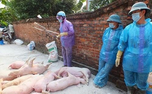 THỜI SỰ 18H CHIỀU 20/5/2019: Ban Bí thư vừa chỉ thị yêu cầu các cấp chính quyền Trung ương, địa phương huy động sức mạnh tổng hợp khống chế dịch tả lợn châu Phi trong thời gian nhanh nhất.