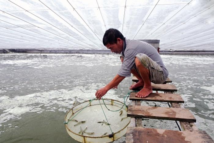 Phòng ngừa dịch bệnh cho vật nuôi thủy sản trong mùa hè (11/5/2019)