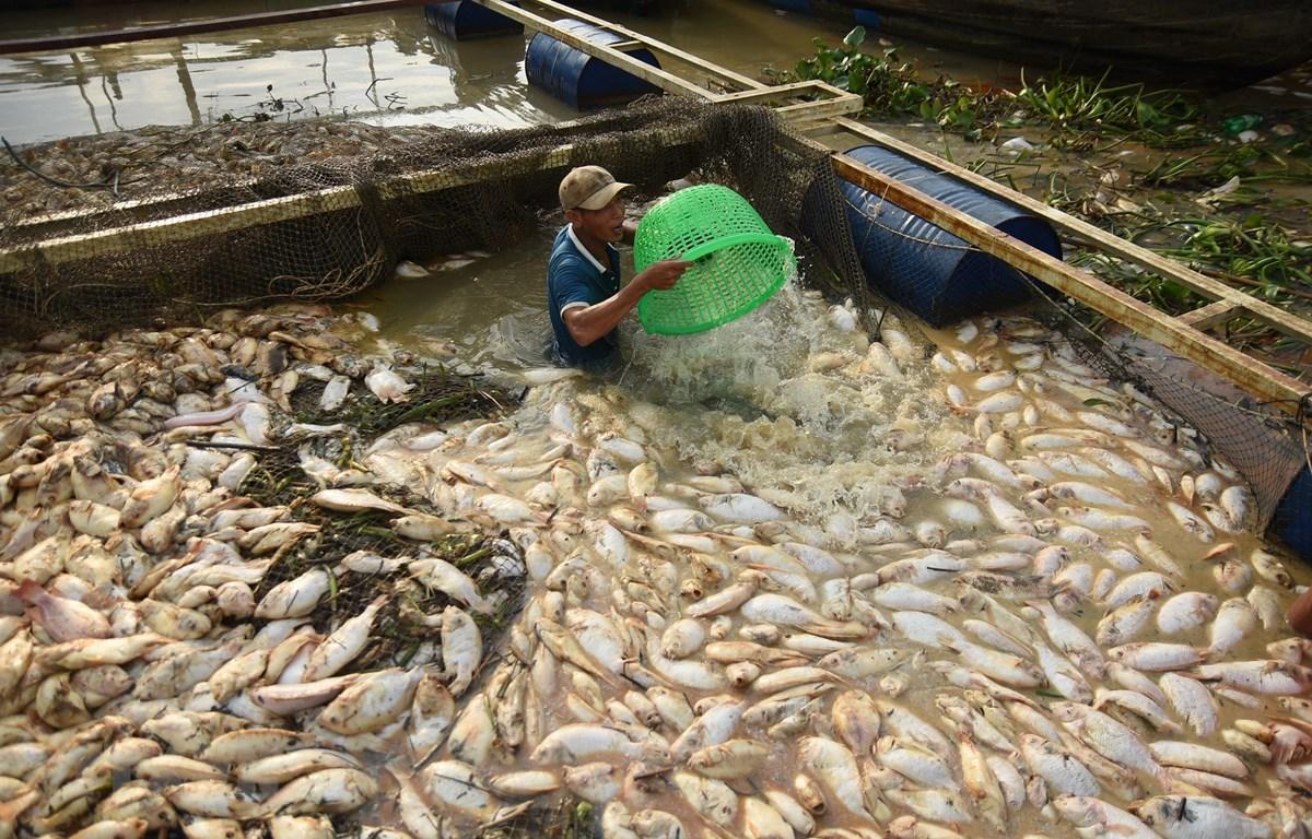 THỜI SỰ 21H30 ĐÊM 28/5/2019: Đồng Nai khẩn trương xác định nguyên nhân gần 1.000 tấn cá chết trắng sông La Ngà.