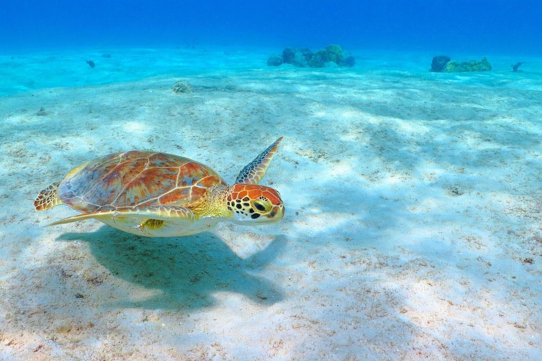 Những biện pháp mà chính phủ Mexico áp dụng để bảo vệ chất lượng hệ sinh thái ven biển (27/5/2019)