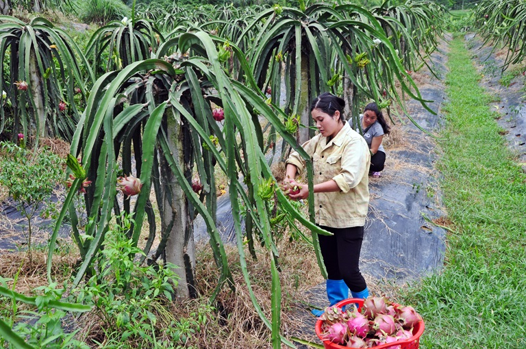 Vĩnh Phúc phát triển sản phẩm đặc trưng hướng đến nông thôn mới bền vững (28/6/2019)