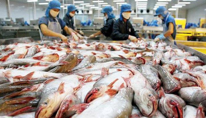 Làm sao để xuất khẩu cá tra ổn định, khi Trung Quốc không còn là thị trường dễ tính? (10/6/2019)