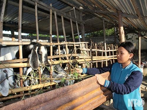 Mô hình liên kết chuỗi trong chăn nuôi: Tận thu phụ phẩm nông nghiệp, giảm ô nhiễm môi trường (26/6/2019)