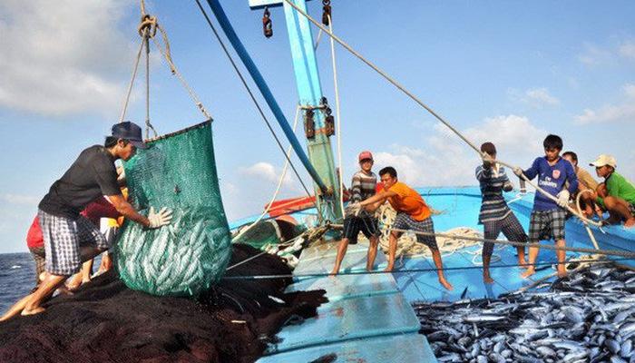 Quản lý khai thác hải sản sau khi Ủy ban châu Âu áp dụng thẻ vàng đối với Việt Nam (30/6/2019)