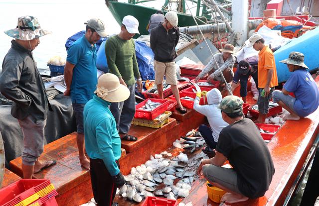 Loạt bài: Phát triển nghề cá bền vững, có trách nhiệm. Phần 2: Nỗ lực gỡ thẻ vàng EC (25/6/2019)