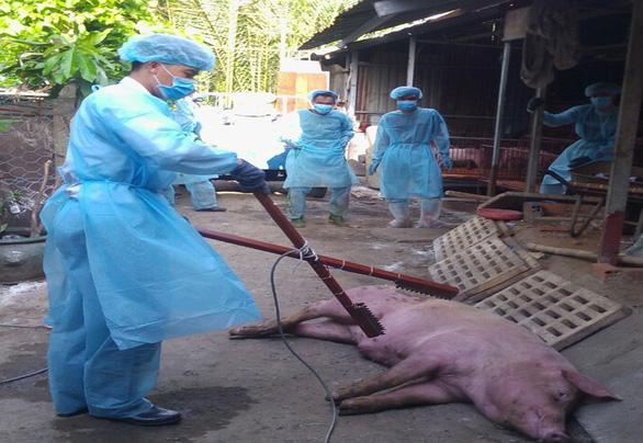 THỜI SỰ 21H30 ĐÊM 11/6/2019: Thành phố Hồ Chí Minh xuất hiện dịch tả lợn lần đầu tiên trên địa bàn