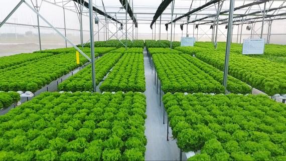 Đưa công nghệ cao vào sản xuất nông nghiệp, kinh nghiệm từ các địa phương (29/7/2019)