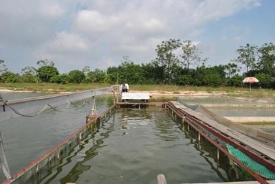 """Người nông dân thu tiền tỷ nhờ tiên phong thực hiện mô hình """"sông trên ao"""" (24/7/2019)"""
