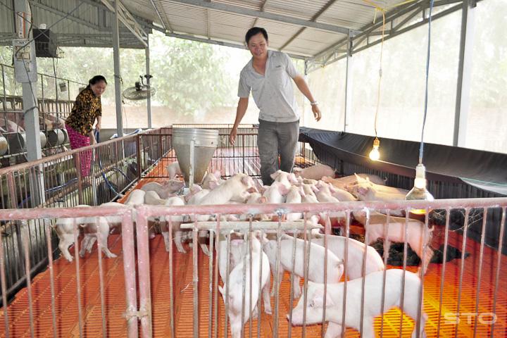 Những giải pháp phát triển chăn nuôi lợn bền vững (4/7/2019)