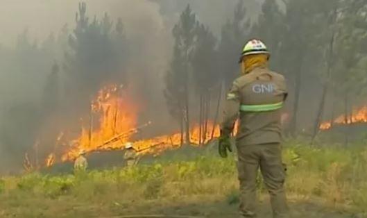 Cháy rừng lớn ở miền Trung Bồ Đào Nha: Ít nhất 20 người bị thương (23/7/2019)