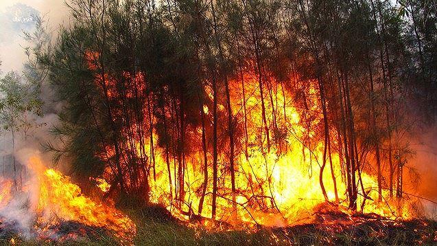 Tập trung cao độ phòng cháy, chữa cháy rừng (2/7/2019)