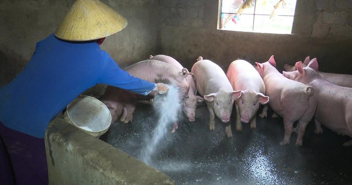 Việt Nam có kết quả bước đầu về vacxin chống dịch tả lợn châu Phi (2/7/2019)