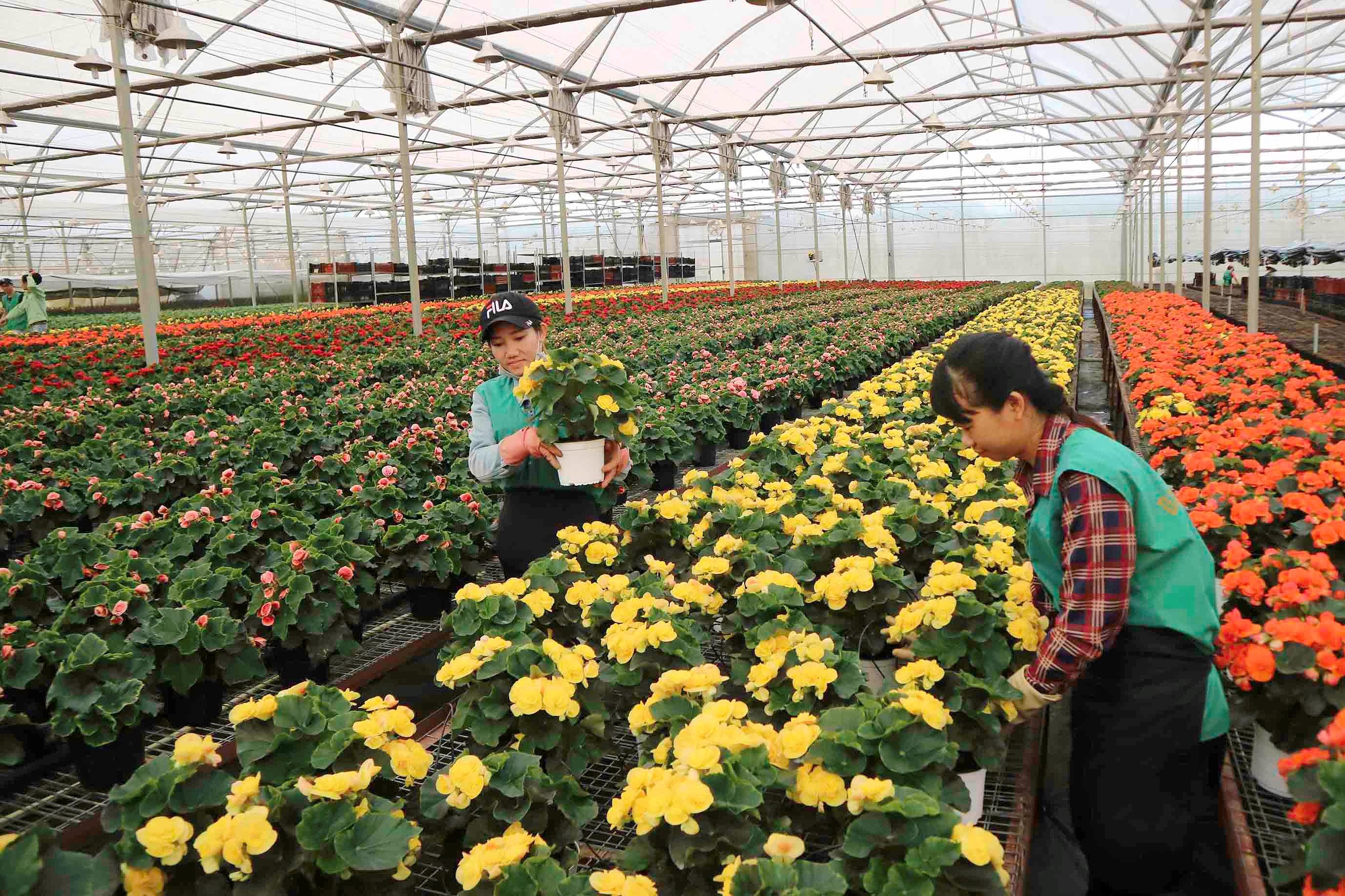 Dự án nông nghiệp tạo đà cho phát triển nông nghiệp bền vững (13/7/2019)