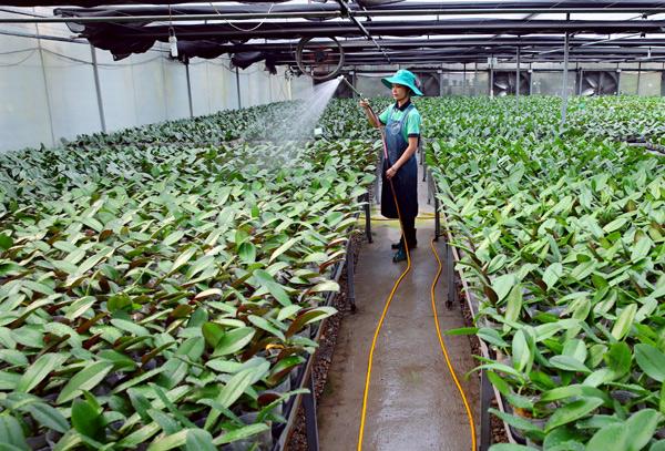Tháo gỡ những rào cản cho doanh nghiệp đầu tư vào nông nghiệp (25/7/2019)