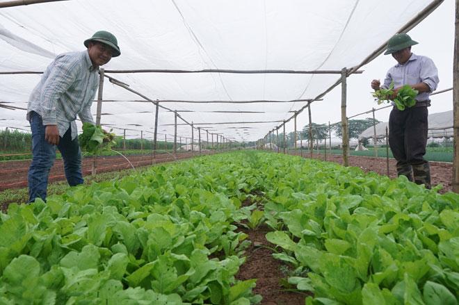 Giải pháp hiệu quả nâng cao hoạt động của Hợp tác xã nông nghiệp (22/7/2019)