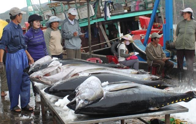 Ứng dụng công nghệ bảo quản thủy hải sản giúp đánh bắt xa bờ (13/7/2019)
