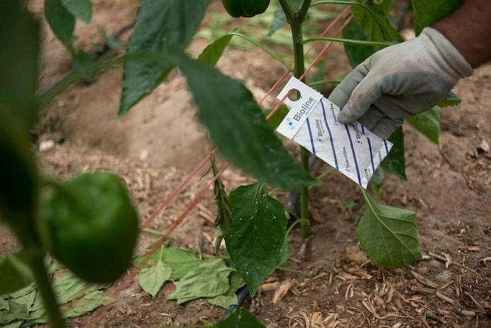 Côn trùng thay thế thuốc trừ sâu trong nông nghiệp tại Tây Ban Nha (29/7/2019)
