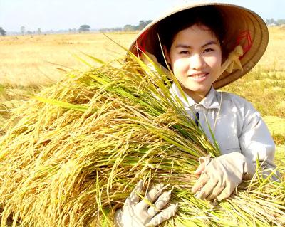 Nghe cách nông dân định vị thương hiệu lúa gạo (17/7/2019)