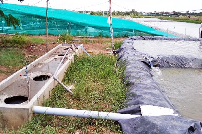 Mô hình xử lý chất thải ao nuôi tôm bằng bể biogas (31/7/2019)