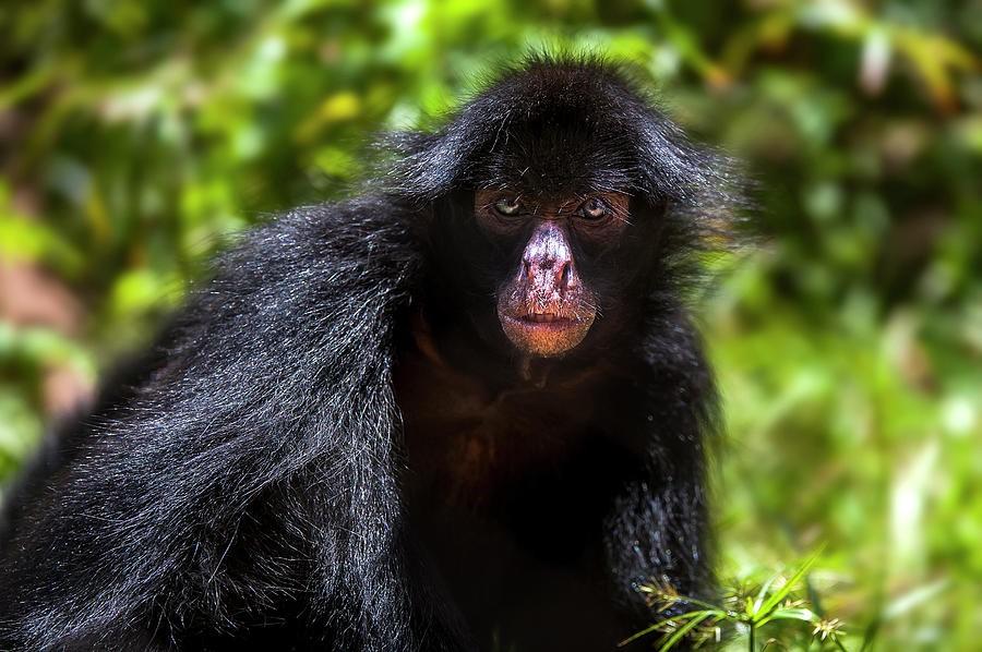 Nỗ lực của các quốc gia Nam Mỹ trong việc cứu những loài động vật hoang dã may mắn còn sống sót sau thảm họa cháy ở rừng mưa nhiệt đới Amazon (30/8/2019)