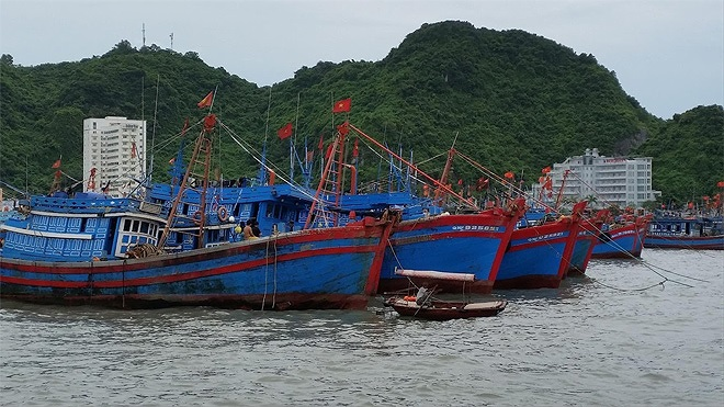 Ngành thủy sản nỗ lực thực hiện quản lý nghề cá, chống đánh bắt bất hợp pháp (31/8/2019)