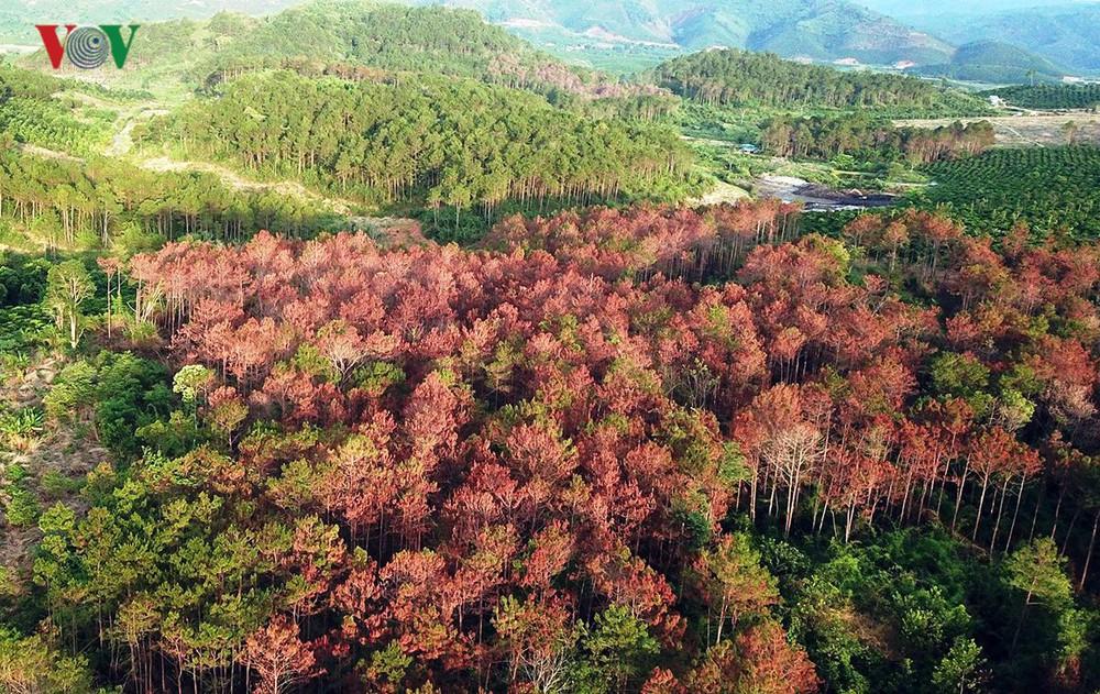 THỜI SỰ 21H30 ĐÊM 7/8/2019: Nhiều thách thức cho việc bảo tồn rừng và tài nguyên thiên nhiên của Tây Nguyên trong bối cảnh phát triển kinh tế, xóa đói giảm nghèo cho người dân sống gần rừng còn hạn chế, áp lực lên rừng tự nhiên vẫn rất lớn