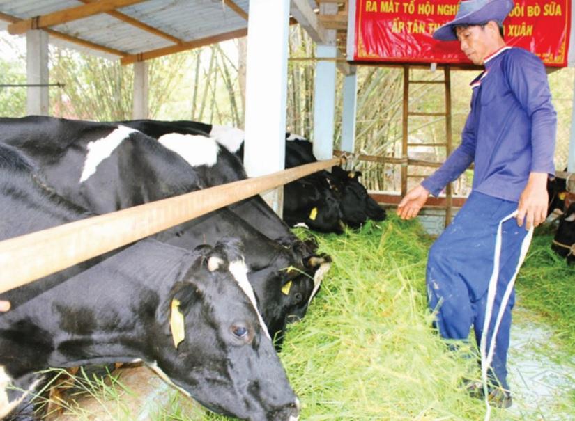 Chăn nuôi áp dụng công nghệ vi sinh thích ứng biến đổi khí hậu (28/8/2019)