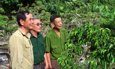 Một số mô hình phát triển kinh tế của cựu chiến binh tỉnh Ninh Bình (12/8/2019)