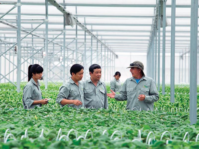 Liên kết để phát triển nông nghiệp theo hướng công nghệ cao (6/8/2019)